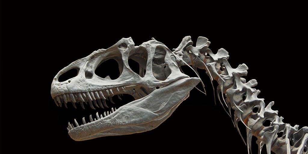Dinosaurs@IMAG