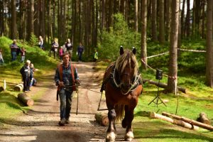 Horse logging small